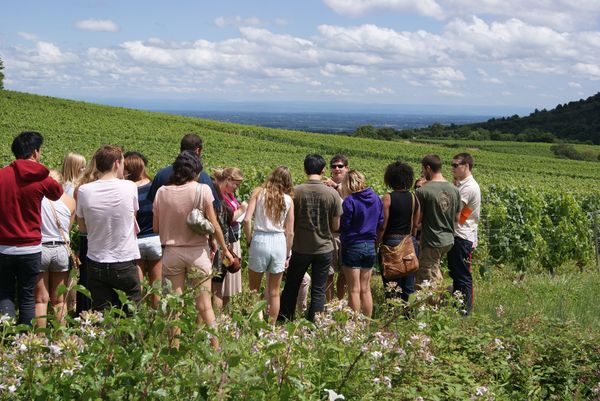 A vineyard tour in Beaujolais