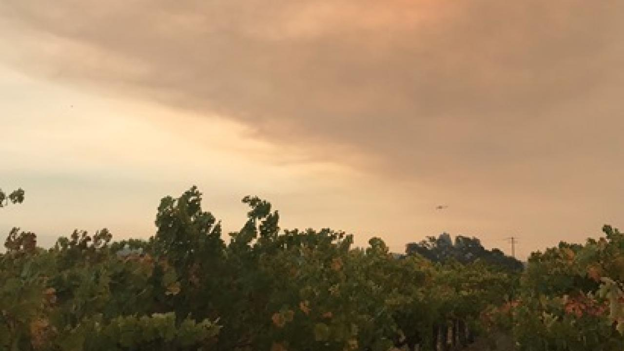 Smoke in Napa Valley