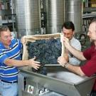 Viticulture and enology professors, from left, David Block, Roger Boulton, and Andy Waterhouse in the Teaching and Research Winery at UC Davis. (photo: John Stumbos/UC Davis)