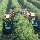 Mechanical Harvesting for Tree Crops